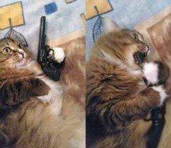 Кот с пистолетом во рту