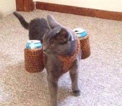 Кот с банками напитков