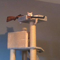 Кот с ружьем