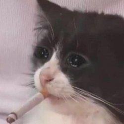 Кот с сигаретой в зубах и плачет