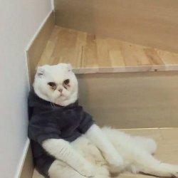 Кот с синяками под глазами