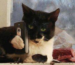Кот с телефоном