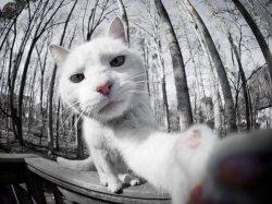 Кот селфи