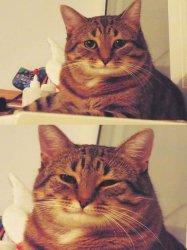 Кот - Ты справишься