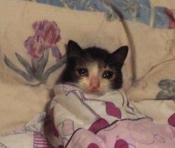 Кот в кровати и слезы из глаз