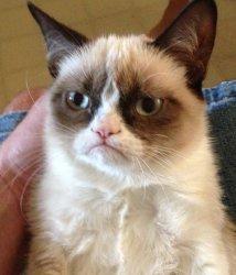 Котик с сердитой мордахой