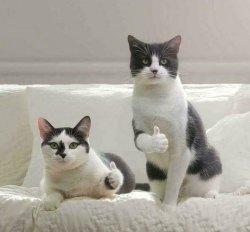 Коты показывают лайк