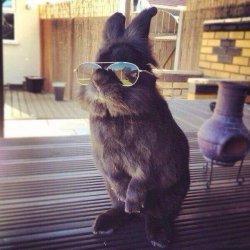 Крутой кролик