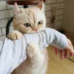 Кусь за руку