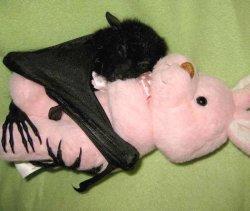 Летучая мышь обнимает игрушку зайца