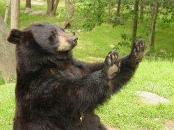 Медведь - огромная просьба