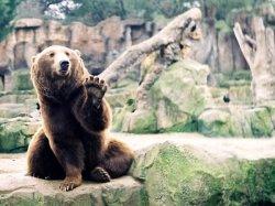 Медведь - узбагойся