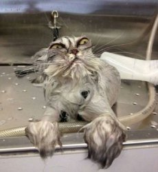 Мокрый кот