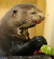 Морской лев недоволен