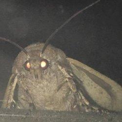 Мотылек и лампа