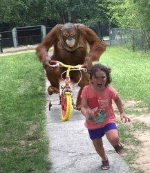 Обезьяна на велосипеде едет за девочкой