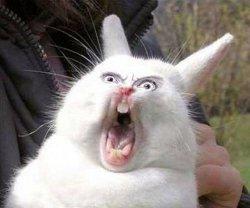 Орущий заяц - Колокольчики Бубенчики