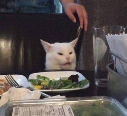 Озадаченный кот за столом
