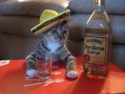 Пью с котом