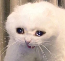 Плачущая кошка