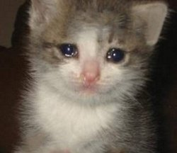 Плачущий котик