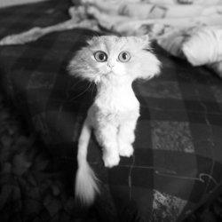 Постриженная котейка