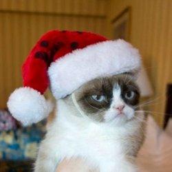Сердитый кот и шапка деда мороза