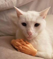 Штош кот