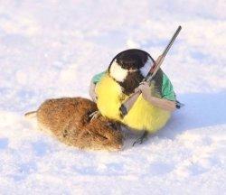 Синица и мышь