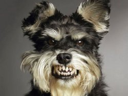 Собака с бешенством