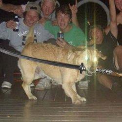 Собака с мечем