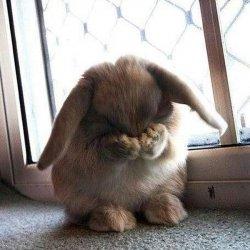 Стыдящийся кролик