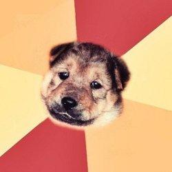 Типичная собака