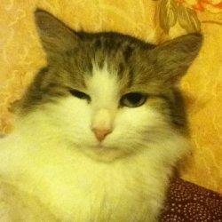 Ты меня уважаешь? - кот