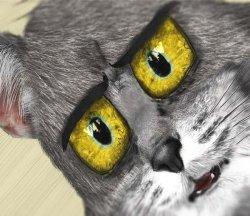 Удивленный кот Том в реальности