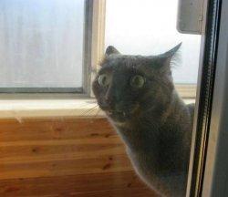 Удивленный кот выпучил глаза