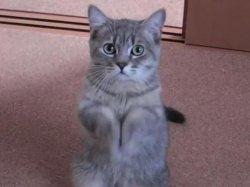 Умоляющий кот