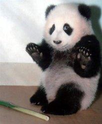 Успокаивающий Панда