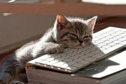 Усталый кот на клавиатуре