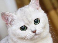 В мире грустит один котик