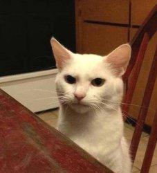 Злой кот смешно смотрит