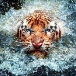 Злой тигр